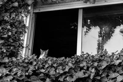 Nika en la ventana